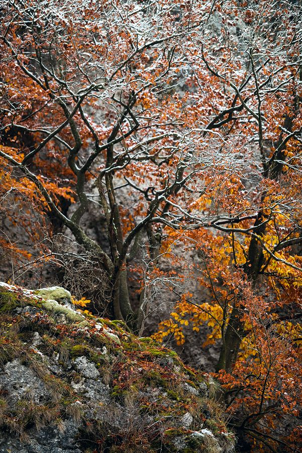 Photograph sweetened autumn by Stephan Amm on 500px