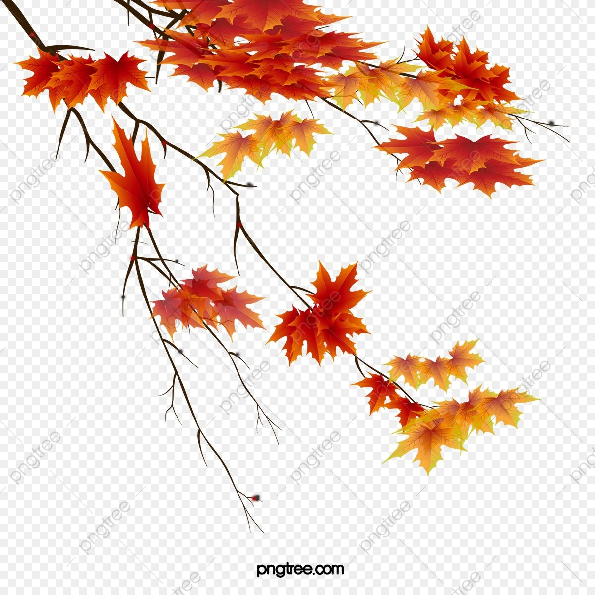 Autumn Leaves Beautiful Maple Leaf Maple Leaf Clipart Autumn Red Leaves Png Transparent Clipart Image And Psd File For Free Download Leaf Clipart Maple Leaf Clipart Autumn Leaves