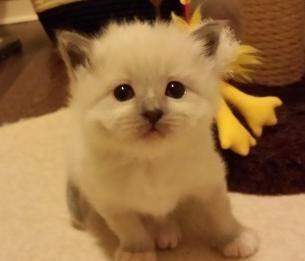 12 Kittehs Ideas Cats Animals Kittens