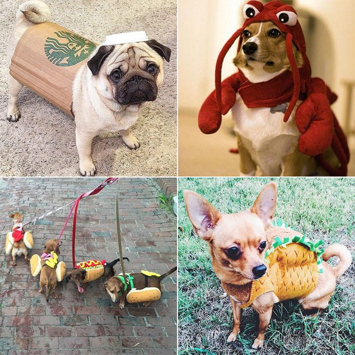 25 Lol Worthy Dogs Dressed As Food Dog Halloween Costumes Dogs Cute Animals