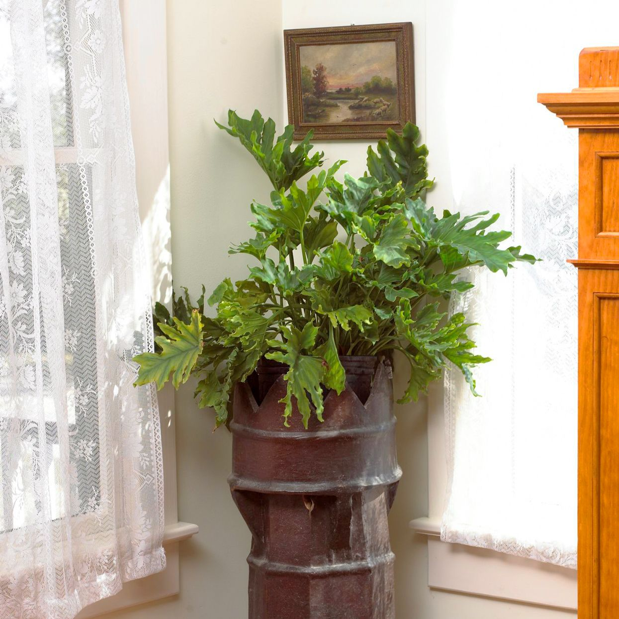 Looking for a LowMaintenance Houseplant? Consider Getting