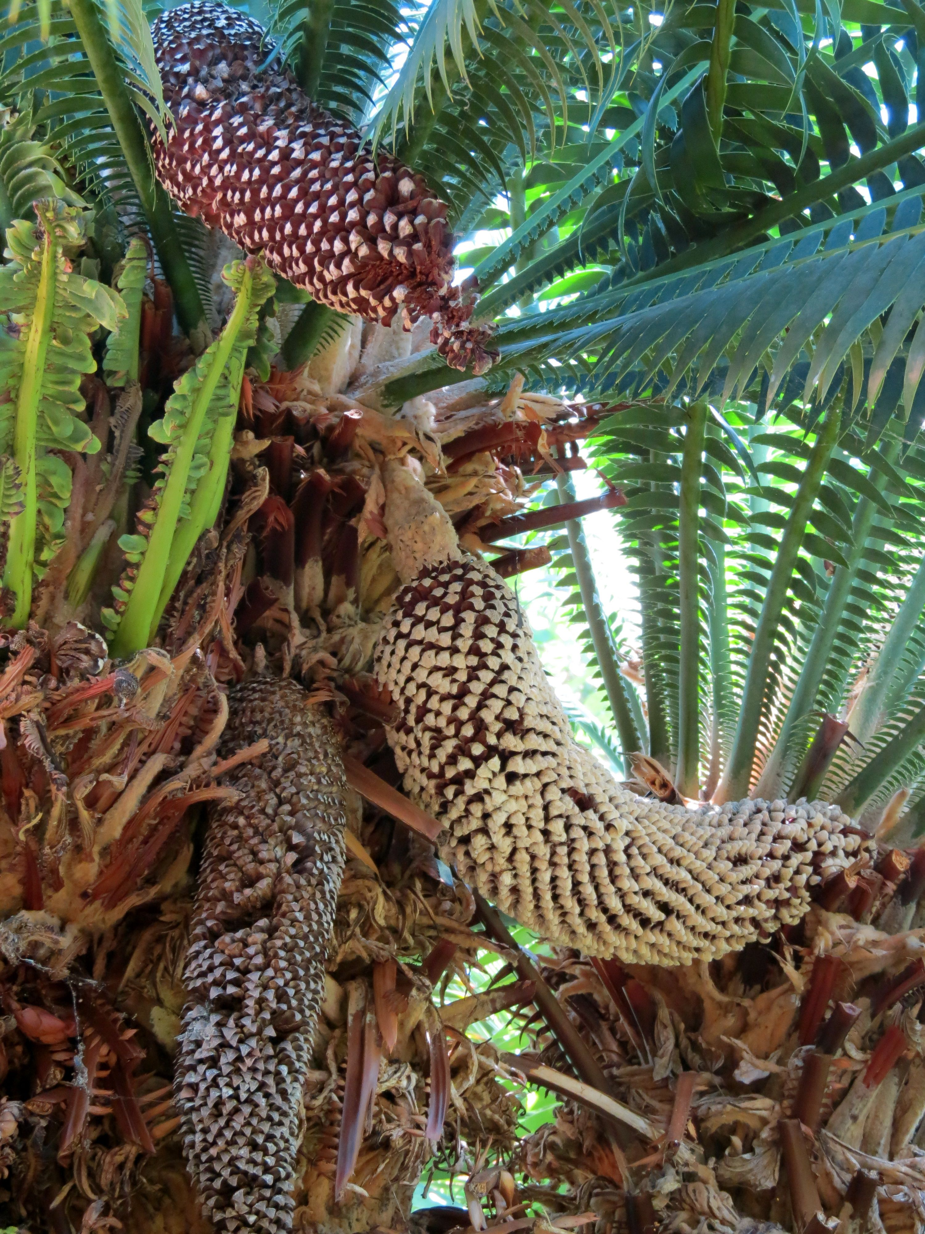 tropical tree and seed pods | an eye on the world | Seed pods