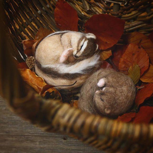 ** 籠の中に迷い込んだ シマリスさんとヤマネさん。 いつ間にか仲良く眠っていました* . コトコトの森に連れて行きます🌿 . 個展 『 コトコトの森 』 2016.10.23〜11.1 (27日定休日) 11:00〜16:00 . 会場は沼津のweekendbooksさん。 @weekendbooks @miraclemule  グリーンデイスプレイ @hitoha.sayuri  焼き菓子販売(23日限定) @kanagutuya . 在廊日は10/23.29.30、11/1午後の予定です。 たくさんの方にほっこりをお届け出来ますように* . #コトコトの森 #weekendbooks #cotocotofeltworks #シマリス#chipmunk#ヤマネ