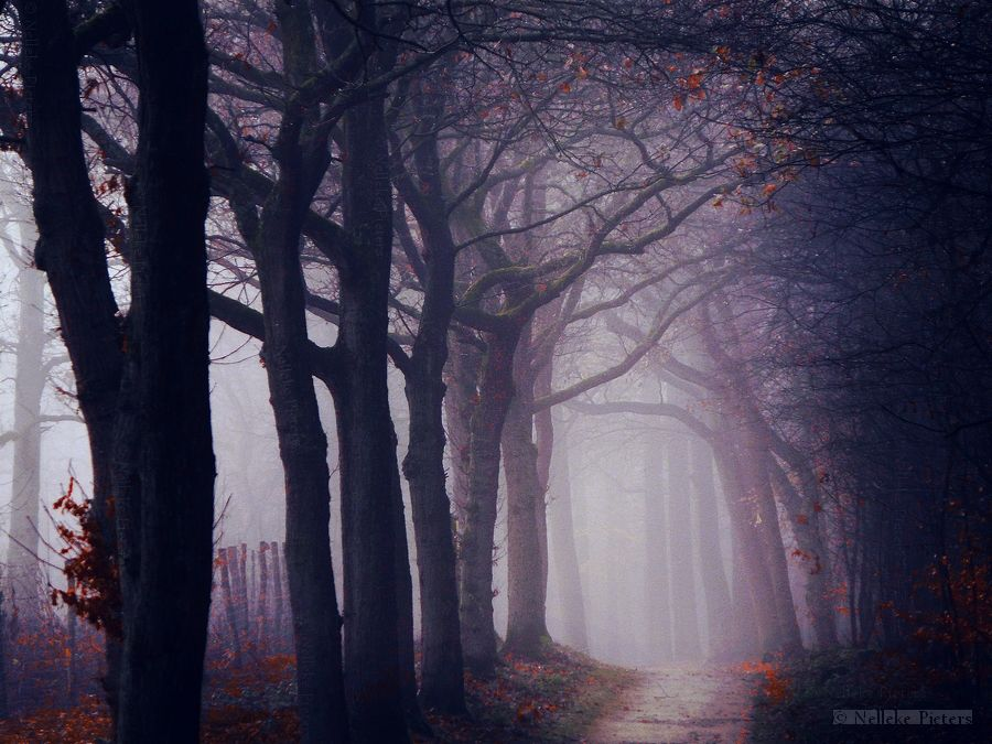 Augen Bäume Herbst Dunkle Nacht Wald Wald Wallpaper: Folklore By Nelleke.deviantart.com On @deviantART