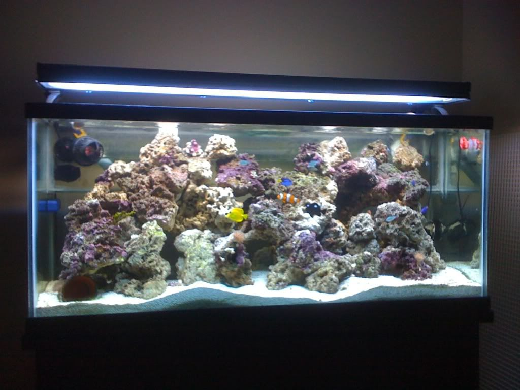 Salt water aquarium setup salt water aquarium pics for Reef aquarium fish