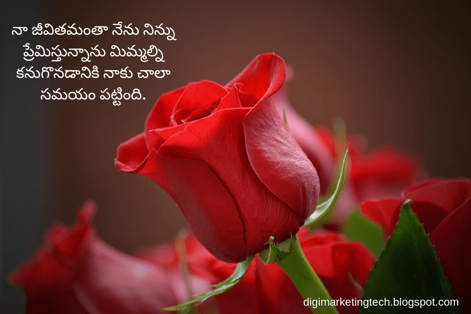 Love Quotes In Telugu Best Unconditional Love Quotes Rose Flower Wallpaper Flower Close Up Beautiful Rose Flowers