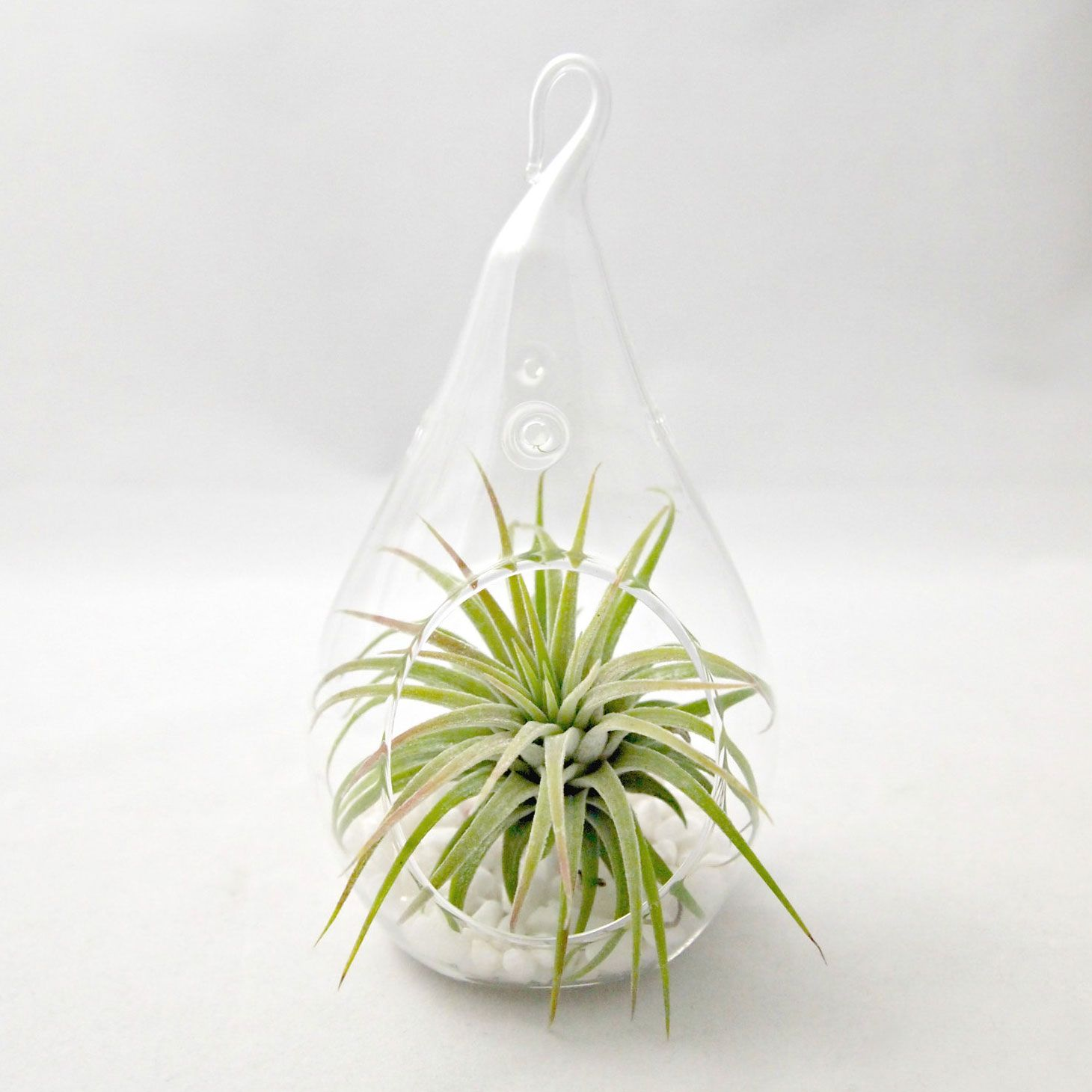 Droplet Terrarium 5 off (With images) Air plant