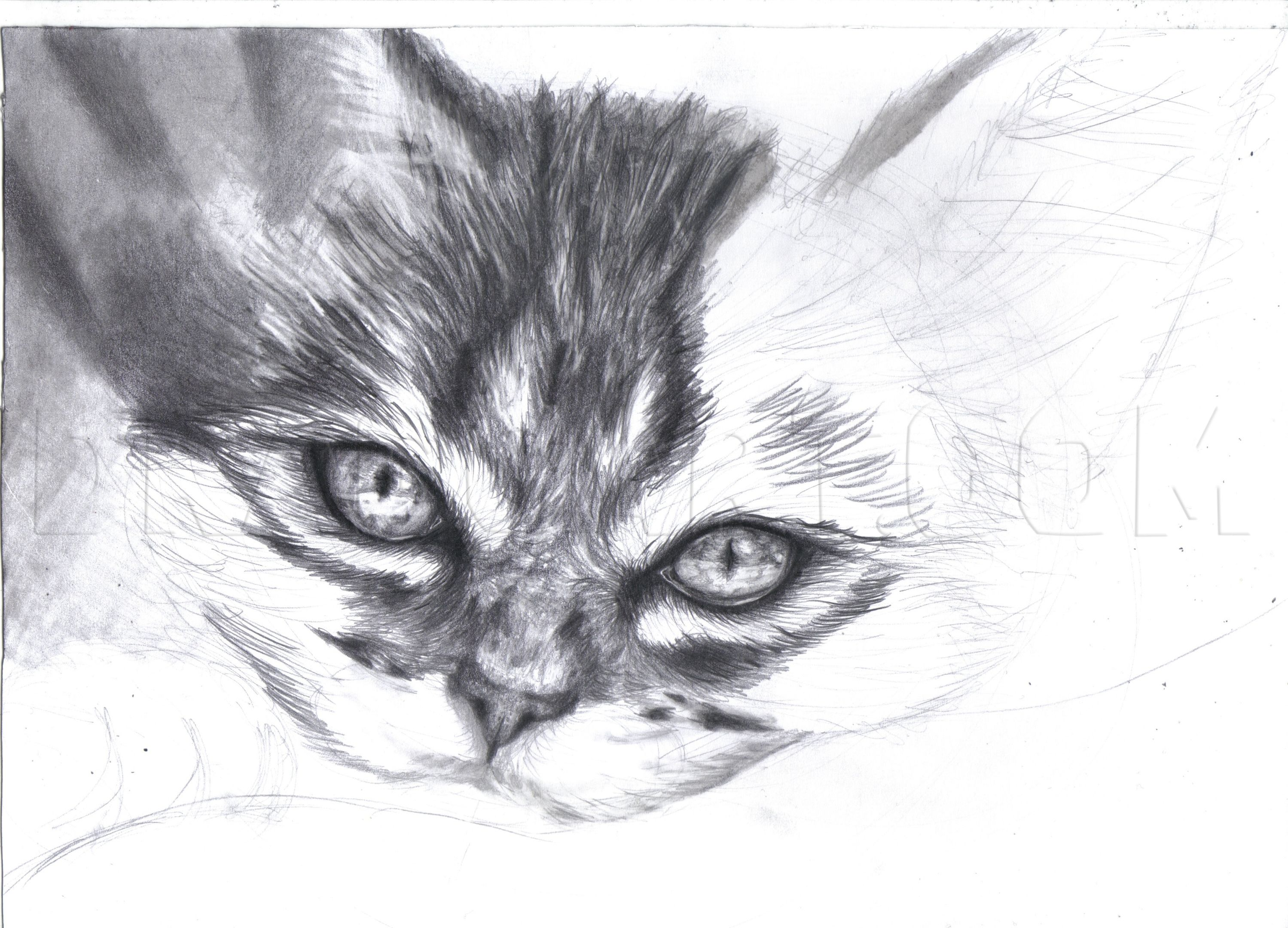 How To Draw A Realistic Kitten Cute Kitten Step By Step Drawing Guide By Duskeyes969 Dragoart Com In 2020 Kittens Cutest Cat Sketch Realistic Animal Drawings