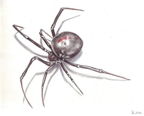 The Black Widow By Katsumi92 Spider Drawing Spider Art