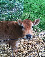 Bambi Of Chaney S Dairy Barn In Bowling Green Kentucky Kentucky
