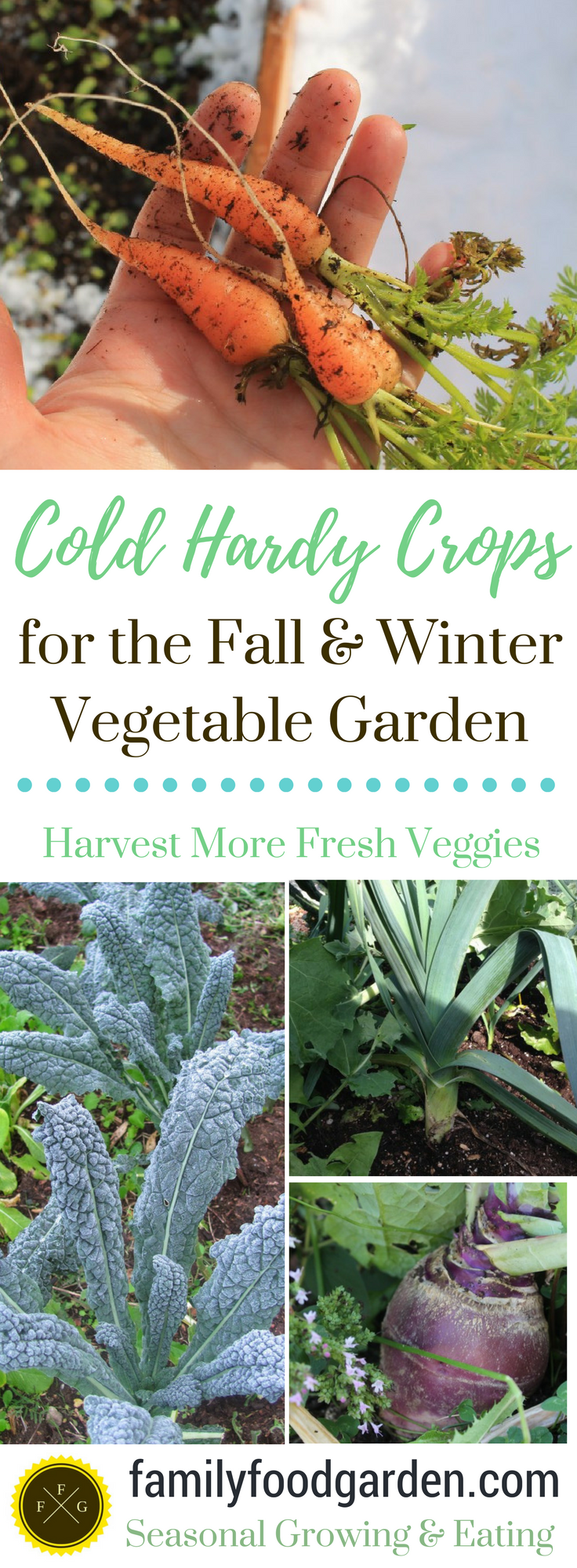cold hardy crops for the fall u0026 winter vegetable garden