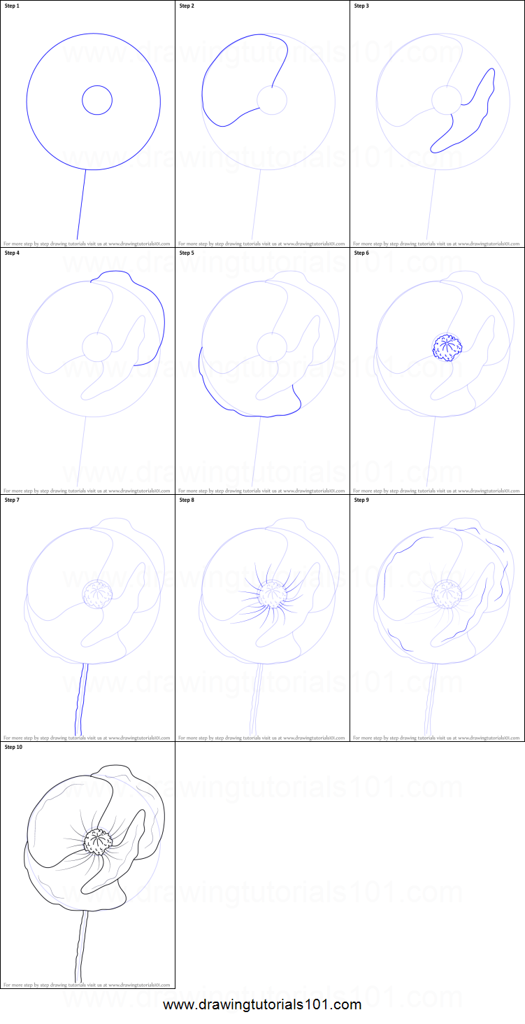 How to draw poppy flower printable drawing sheet by how to draw poppy flower printable drawing sheet by drawingtutorials101 izmirmasajfo