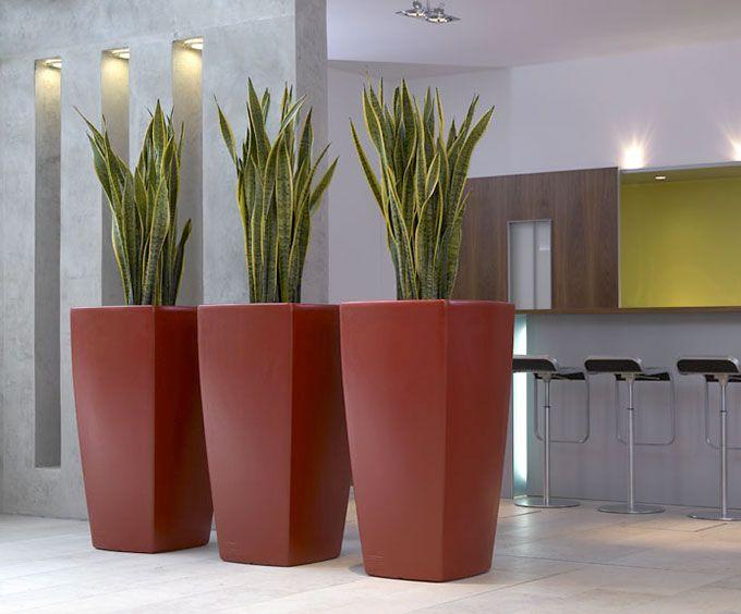 Bogenhanf ist eine robuste trendpflanze ideal als raumteiler braucht wenig platz und im - Robuste zimmerpflanze ...
