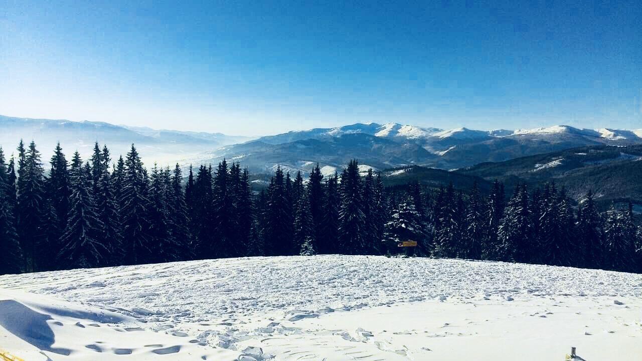 Ukraine Carpathian Forests Carpathian Mountains Bukovel Oekraine