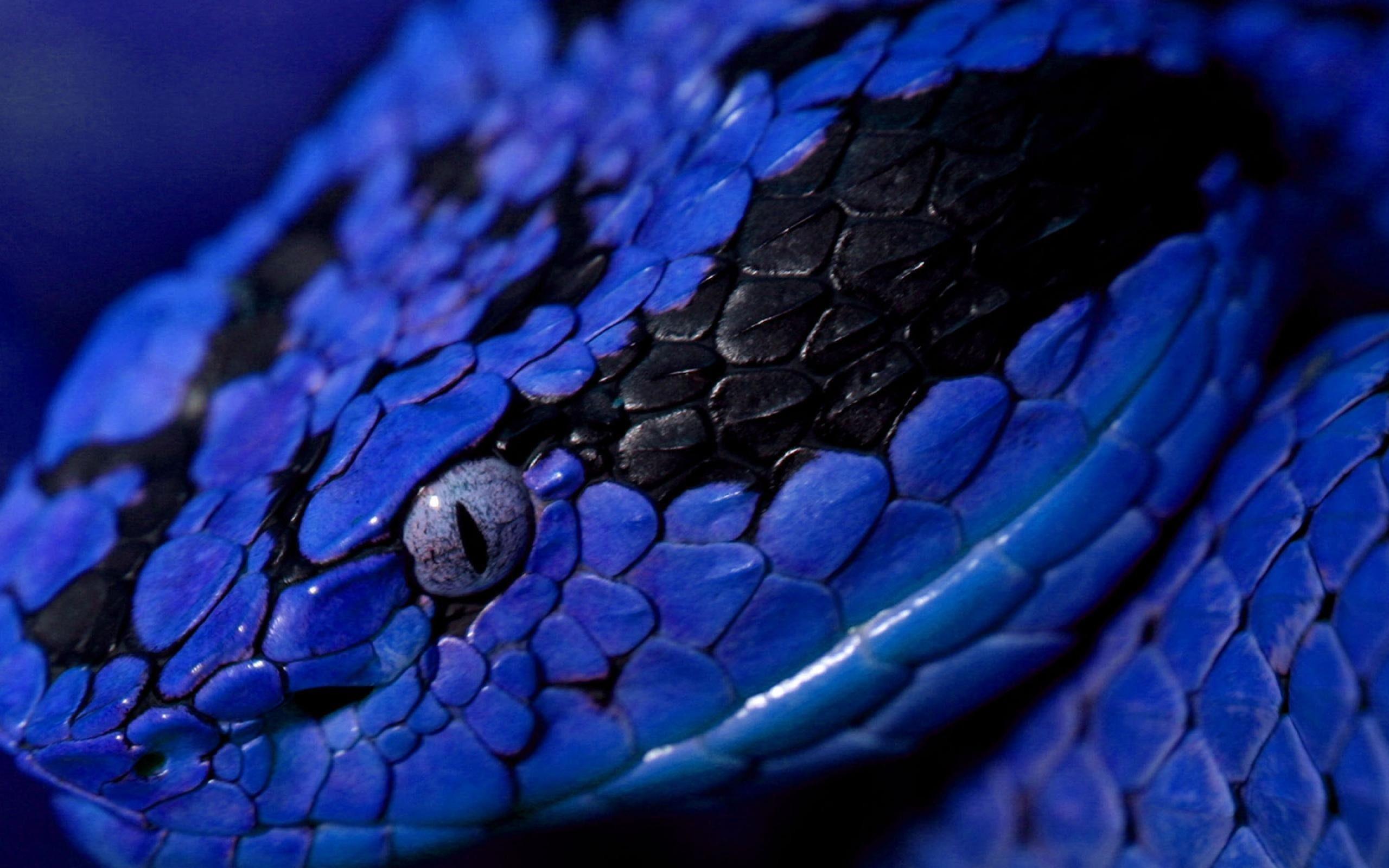 Viper Snake Backgrounds HD Schlangenbilder, Schöne