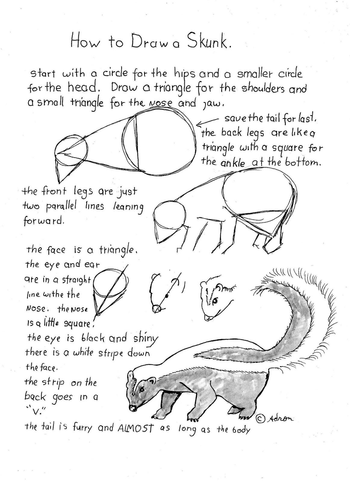 How to Draw Worksheets for The Young Artist: How To Draw A Skunk Worksheet
