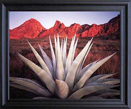 Mexico Desert Blue Agave Cactus Century Plant Wall Decor ... https://www.amazon.com/dp/B01BF6SOYG/ref=cm_sw_r_pi_dp_x_gc57xbVNZJC9T