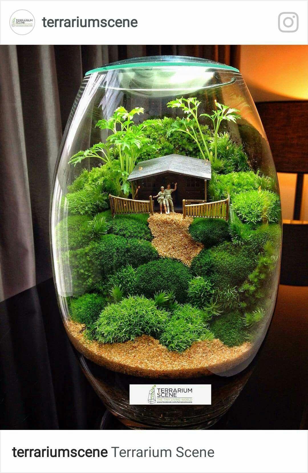 micro scenery as a terrarium fairies garden pinterest mini garten pflanzen und glas. Black Bedroom Furniture Sets. Home Design Ideas
