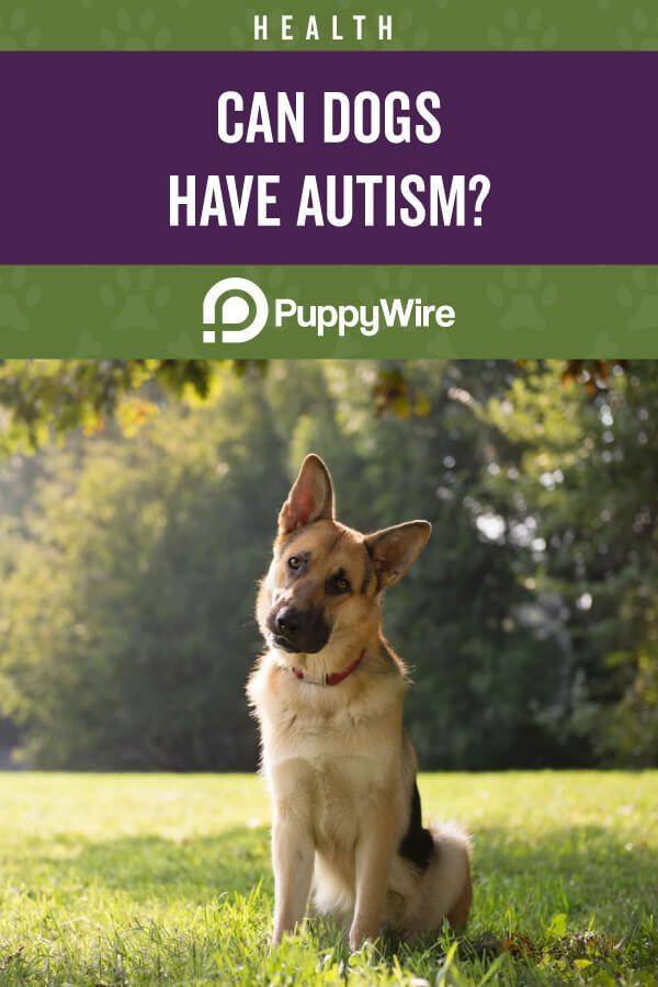 Can Dogs Have Autism Pets Pinterest