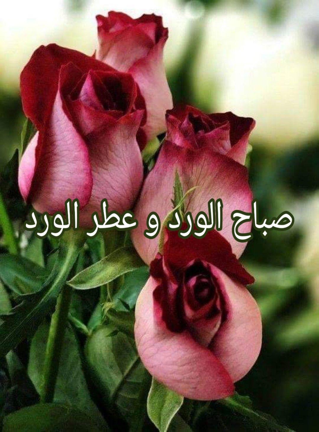 Pin By Hayam Eldeep On Mimi Morning Flowers Good Morning Flowers Flowers