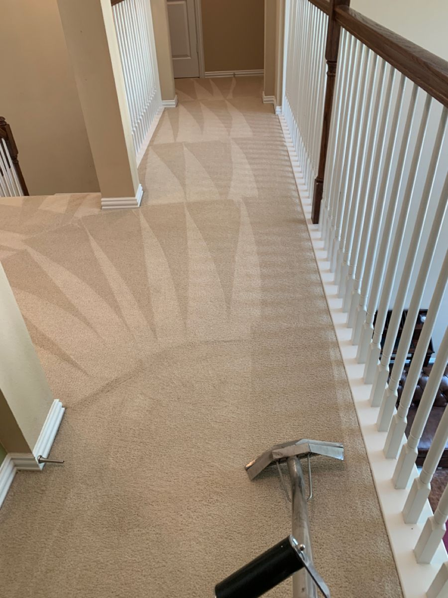 #carpetcleaning #carpetcleaner