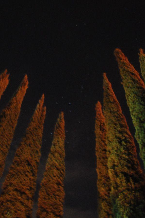 Stars Through The Trees