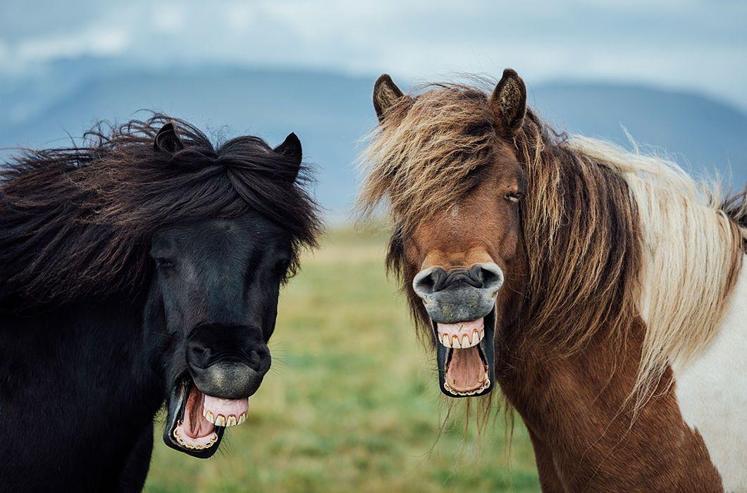Прикольные картинки кони