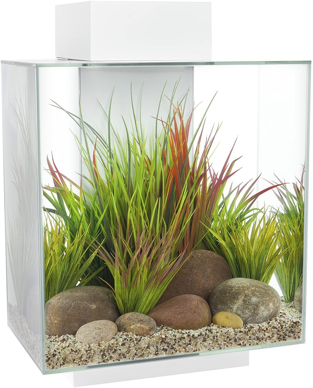 Amazon.com : Fluval Edge 12-Gallon Aquarium with 42-LED ...