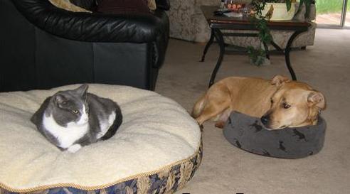 21 kissaa, joiden mielestä koiran peti on kaikkein paras peti   Vivas