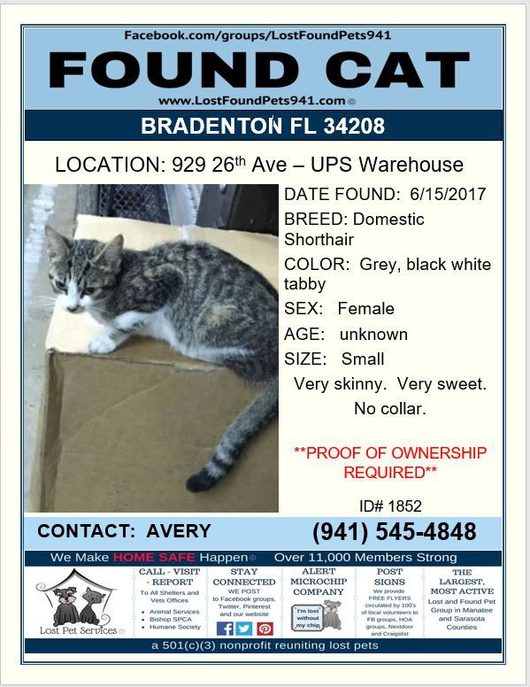 Do You Know Me Found Cat Manatee County Service Animal
