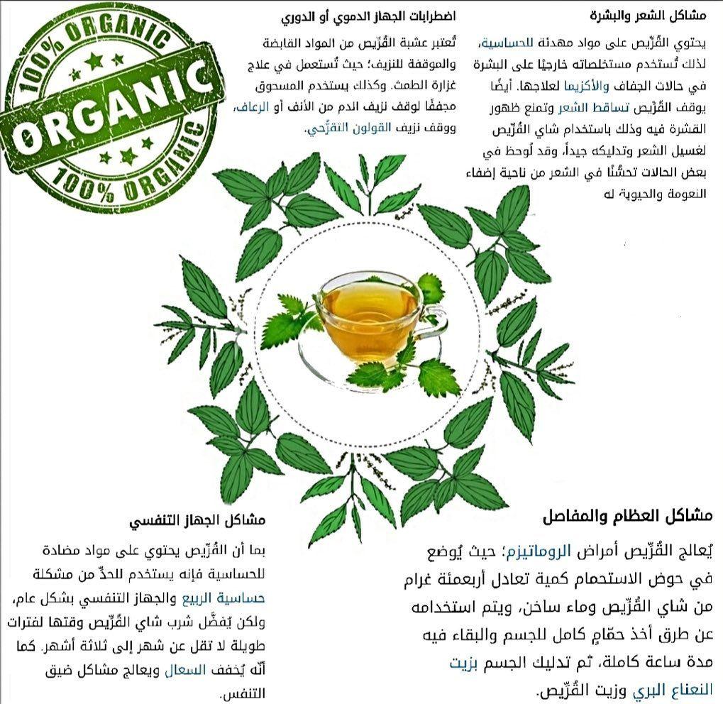 القراص هو احدى النباتات التي تنتمي لفصيلة القراصيات وتتعد فوائد القراص للجسم بشكل عام I Wish Shop فوائد شاي القراص يحتوي نبات القراص على كميات كبي The 100