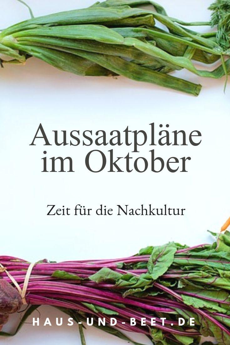 aussaatpl ne im oktober die nachkultur ist entscheidend wintergem se anbauen gem se anbauen
