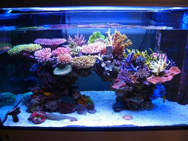 Aquariums Inspiration | Marine fish tanks, Reef aquarium ...