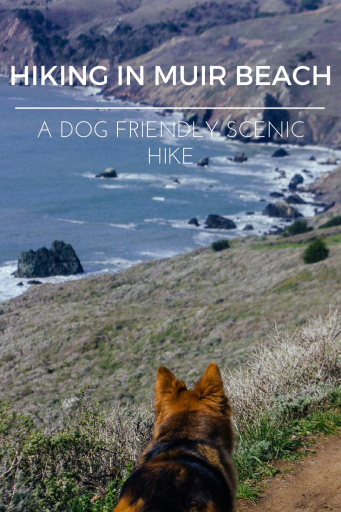 Muir Beach Lookout: The perfect dog-friendly spot in Marin county