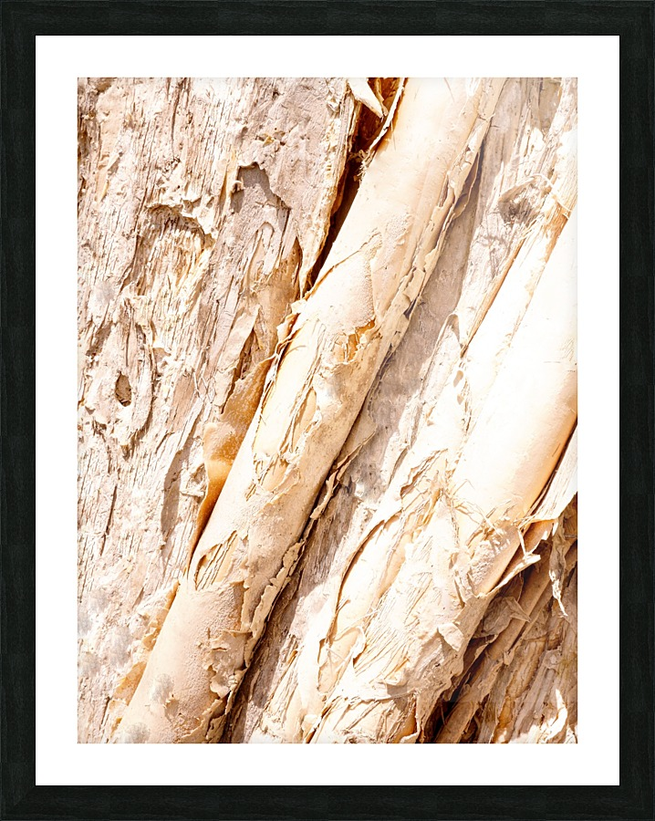 Aussie Gum Tree Bark 7 Lexa Harpell Canvas Artwork