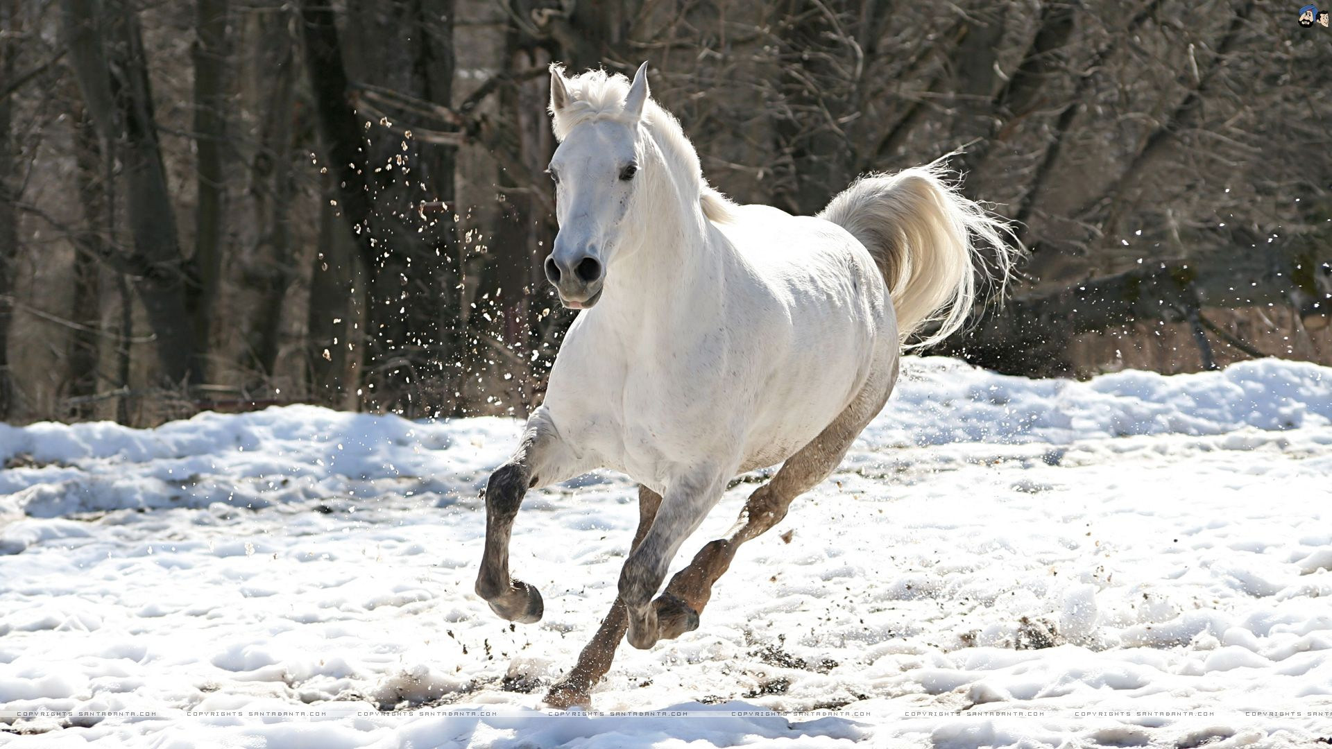 Amazing Wallpaper Horse Snow - 18141d7111ab5c5b0bad403fe3847758  Collection_59871.jpg