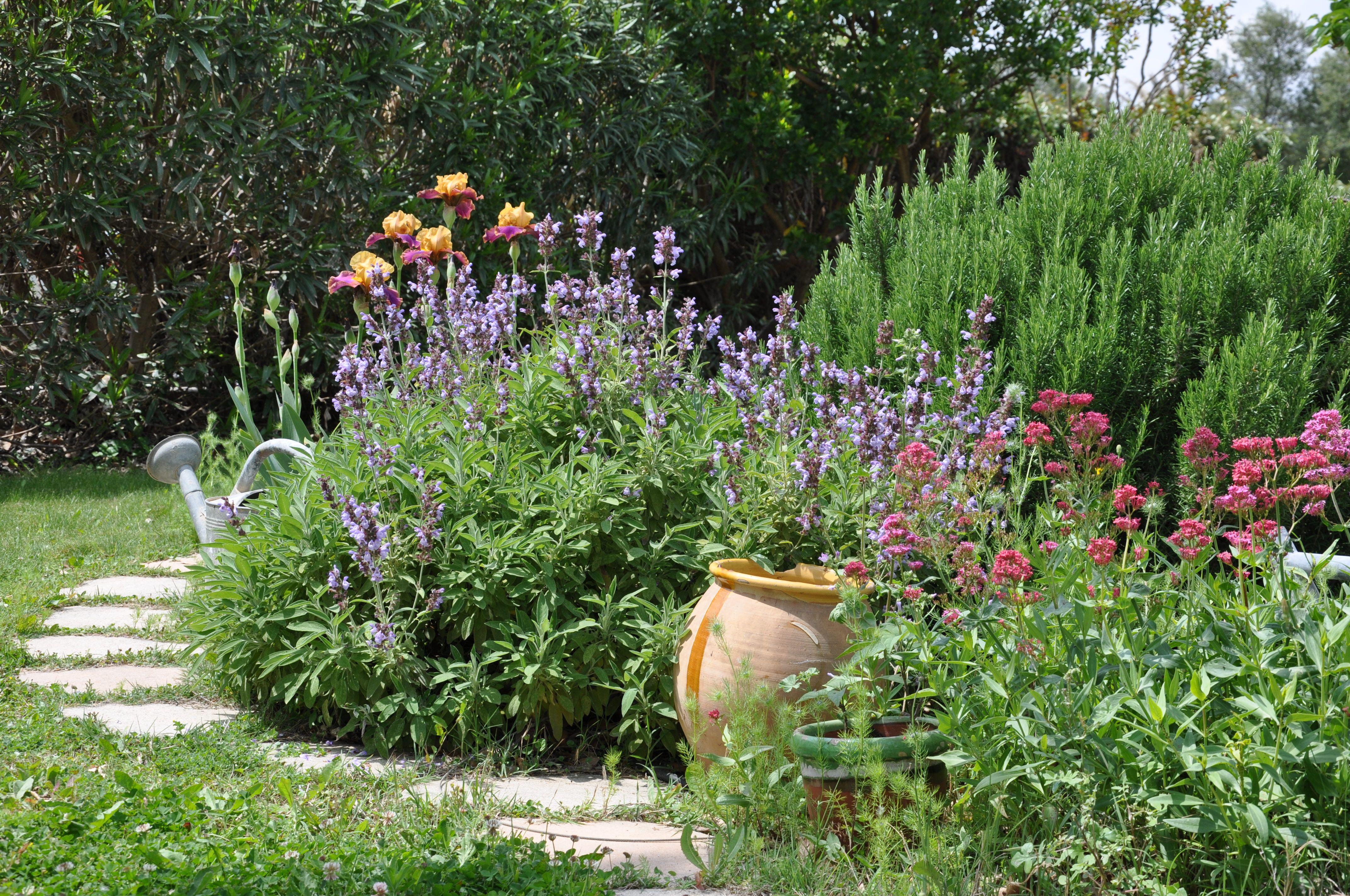massif dans mon jardin ... iris, sauge, romarin, ....... | Mon ...