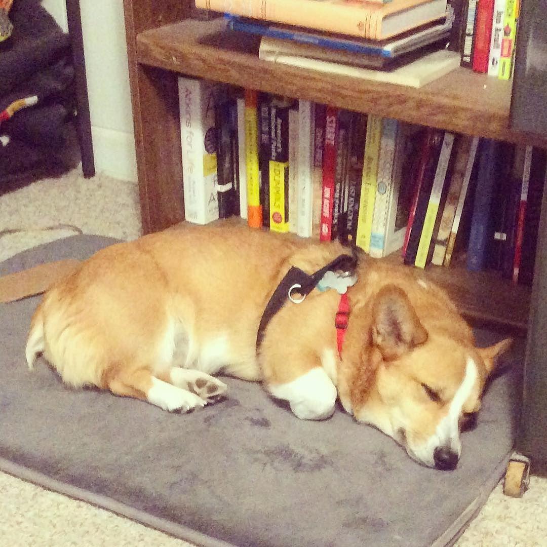 Sleeping Away Corgi Corgination Montana Books Sleep
