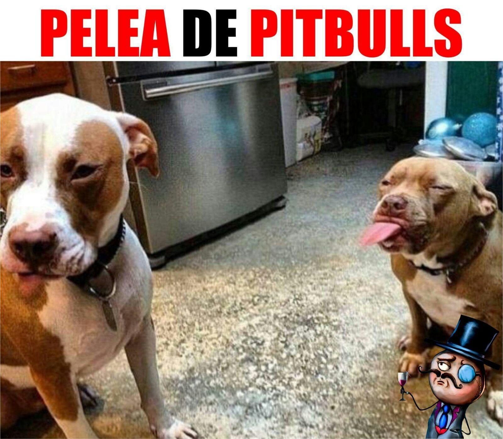 Meme Perro Pelea Pitbull Animal Captions Funny Animals Funny Dogs