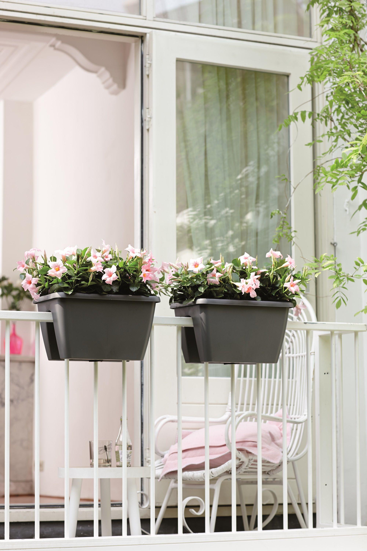 Bloembakken Voor Balkon.Bloembak Die Makkelijk Aan De Reling Van Een Balkon Gehangen Kan