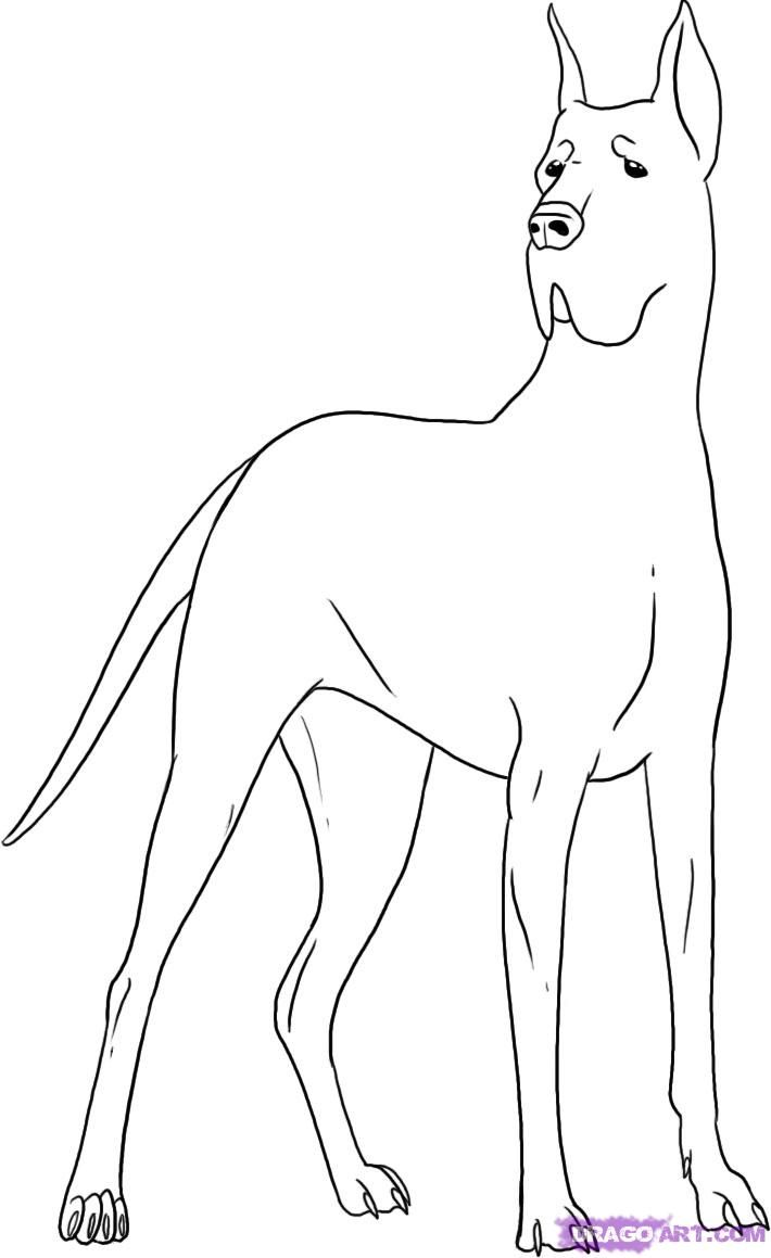 How To Draw A Great Dane Google Search Watercolor Dog Dog