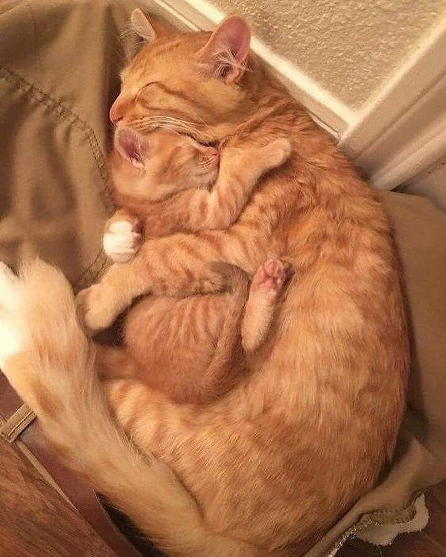 I Loves My Ball With Images Cat Hug Cute Baby Animals Cats