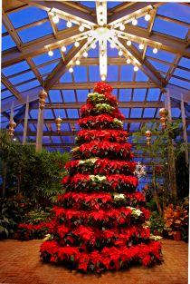 Dow Gardens Christmas Walk 2020 Poinsettia Tree   Dow Gardens, Midland, MI Christmas Walk, A free