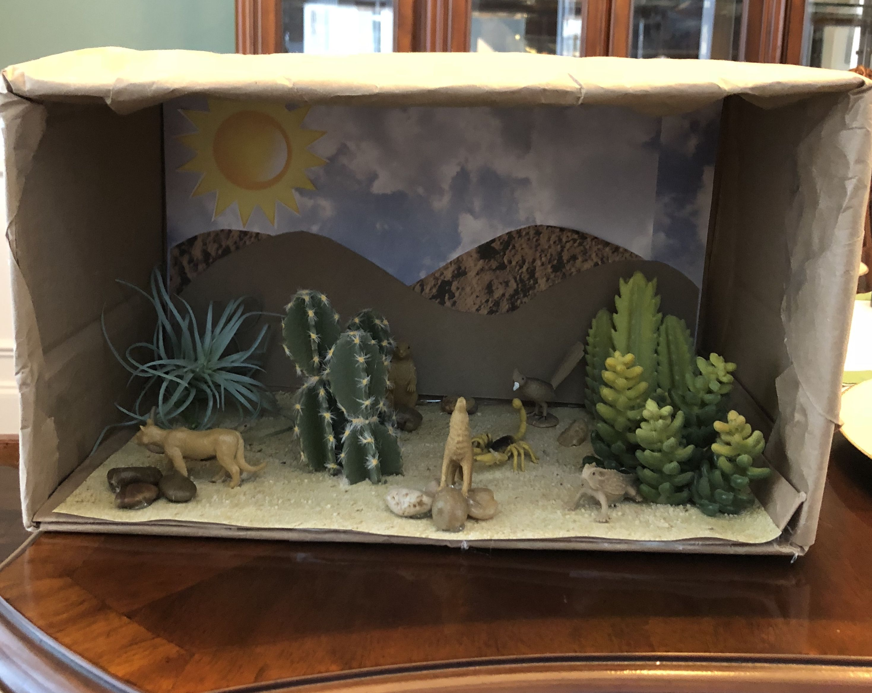 Desert Biome Project