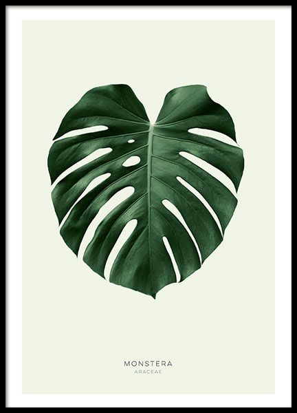 Botanical posters with green leaves