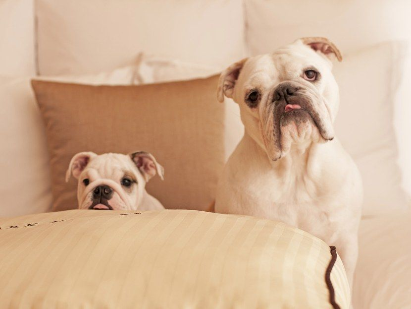 These Hotels And Resorts Do Much More Than Simply Allow Pets They Treat Dogs
