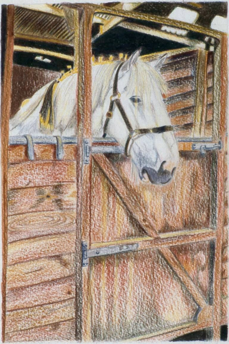 White Shire Horse Waiting In The Stable Drawing Horse Drawings Horses Drawings [ 1152 x 770 Pixel ]