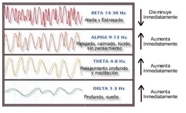 Existen cuatro tipos de ondas mientras soñamos: alfa, beta, theta y delta.