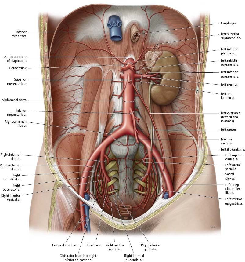 Pin de Leslie Doddridge en Nursing notes | Pinterest | Anatomía ...