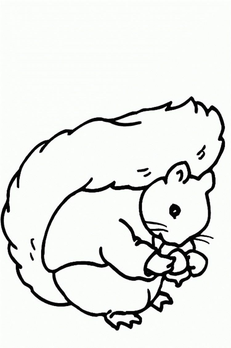 Read moreSweet Squirrel Coloring Pages Squirrel coloring